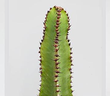 Foto di pianta grassa verde su sfondo bianco tratta dall'opera 'Carte dell'evoluzione' di Jacopo Nocentini (2016)