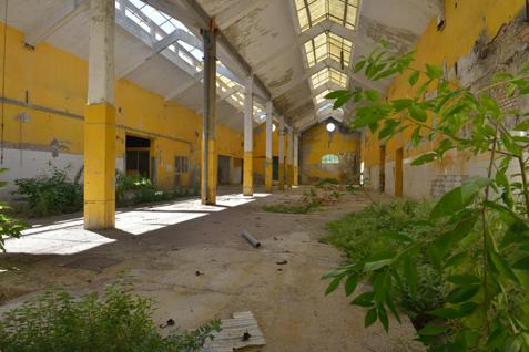 Foto di un capannone abbandonato con piante cresciute nel mezzo.